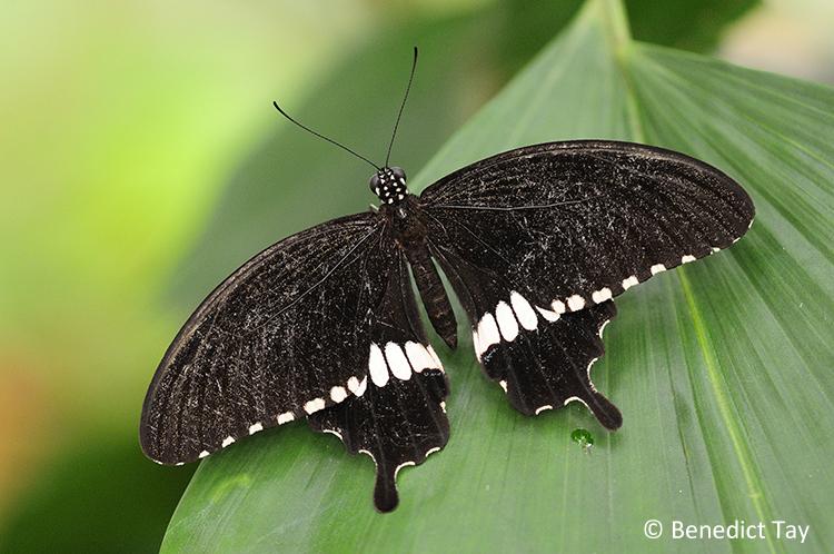Shots For Thailand >> ButterflyCircle Checklist
